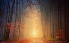Свет солнца в осеннем лесу