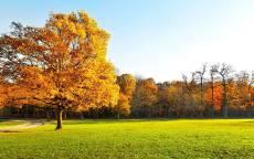 Осенний лес, Одинокое дерево с желтыми листьями