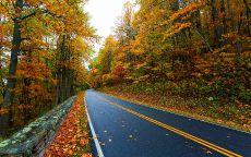 Осенняя дорога в красивом лесу