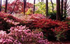 Осенние краски в лесу