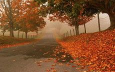 Осенние листья на дороге