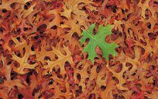 Зеленый лист лежит на желтых листьях