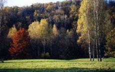 Опушка леса осенью