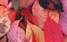 Осенние листья на земле
