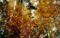 Сентябрь в лесу