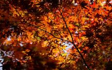 осеннее небо, желтые листья, лес