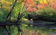 Красно желтая листва