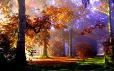 Очень красивый вид осеннего леса