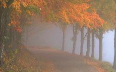 Туман осенью