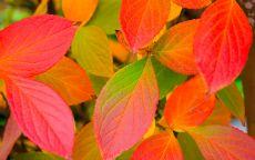 Красные и желтые осенние листья
