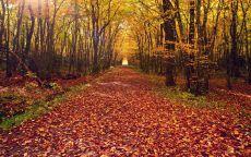 Лесная дорога усыпанная осенними листьями