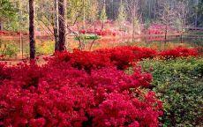 Красный цвет осени