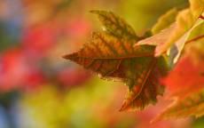 Осень, клен, лист, желтые листья