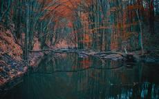 Осень, лес, ручей, желтые листья