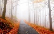 Осень, мокрая дорога, желтые листья, туман