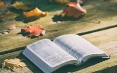 Осень,  листья, стол, дерево, книга