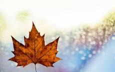 Осень, желтый лист, капли