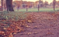 Осень, тропинка, желтые листья, трава, забор