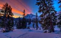 Ночной лес усыпанный снегом
