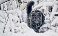 Черный кот в зимнем лесу