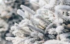 зима, снег, еловая ветка, иней, холод, белый снег