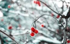Зима, снег, ветка, красная ягода, лед, деревья