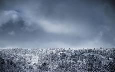 Зима, лес, снег, холод, темное небо