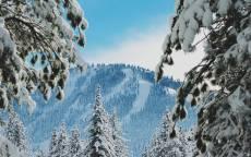 Зима, снег, ели, мороз