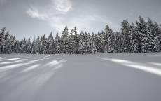 Зима, снежное поле, еловый лес, мороз