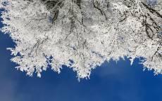 Зима, снег, иней, лед, ветки, дерево, небо