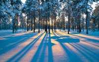 Тень от деревьев на снегу.