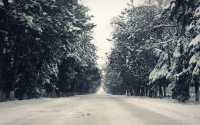 Широкая дорога в зимнем лесу.