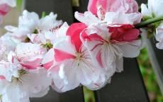 Приходящая Весна