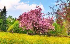 весна, зеленый лес, сиреневое дерево