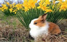 Кролик на цветочной клумбе