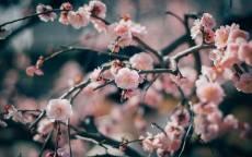 Распускающиеся весенние цветы