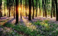 Восход солнца в весеннем лесу
