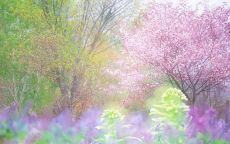 сказочно весенний лес, сиреневые листья
