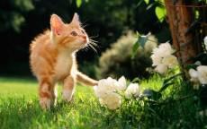 Рыжий котенок на весеннем поле