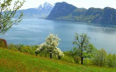весна, горное озеро, дерево с белыми листьями