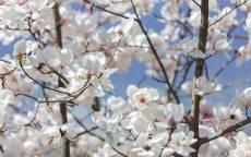 Весенние цветы на ветках