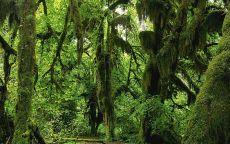 Зеленый мох на деревьях