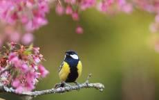 Весна синичка на ветке