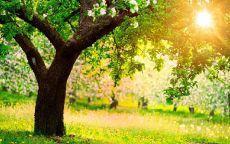весенний лес, дерево, яркое солнце