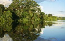 Зеленый берег реки