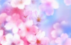 весна, розовые лепестки яблони