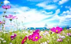 Рисунок весеннее поле