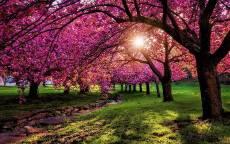 Цветущие весенние деревья, лучи солнца