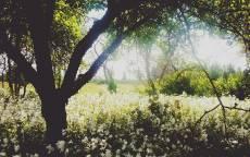Туман, утро, весна, цветочная поляна