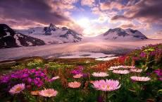 Горные весенние цветы
